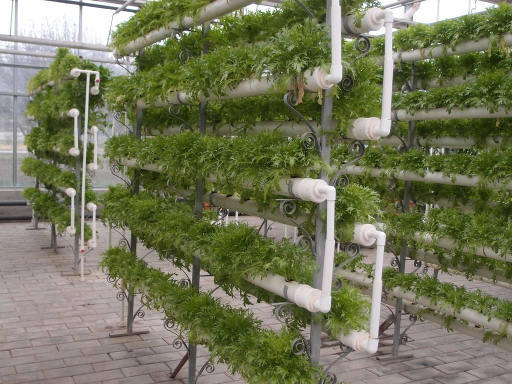 无土栽培技术