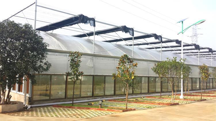 连栋薄膜温室建设
